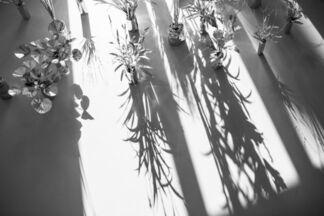 超自然 | cho-shizen - Part 2, installation view