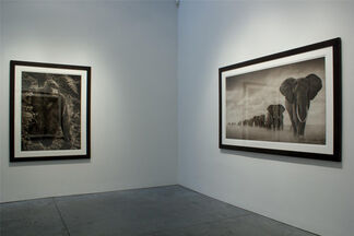 Nick Brandt : On This Earth, A Shadow Falls, installation view