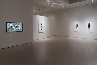 Anne Deleporte: DAZZLE, installation view