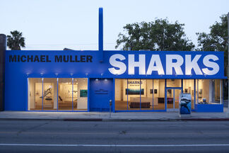 Michael Muller: Sharks, installation view