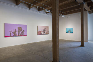 Whitney Bedford: NUMINOUS, installation view
