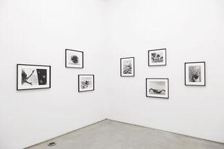 """Carina Brandes - """"Willkommen"""", installation view"""