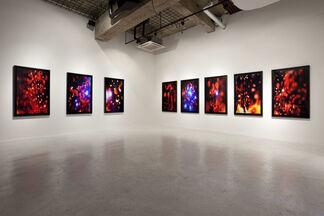 Masahito Koshinaka : individuals, installation view