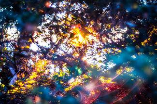 "Yosuke Takeda ""Stay Gold"", installation view"