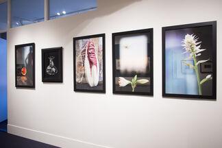 Olivia Parker: Still/Life, installation view