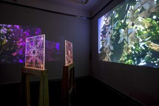 The Chronicles of Flowers, installation view
