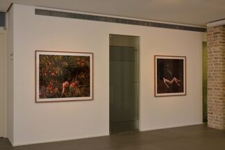 """Itamar Freed: """"Birds of Paradise"""", installation view"""