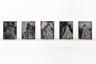CECILIA BRUNSON PROJECTS at ZⓈONAMACO 2018, installation view