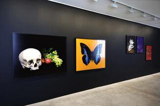 Shirana Shahbazi, installation view
