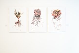 Conscious By Nature – A Clinton Friedman Solo Exhibition, installation view