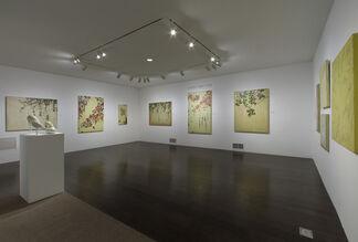Kaoru Mansour, installation view