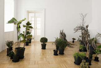 ISA MELSHEIMER - Plant Hunters, installation view