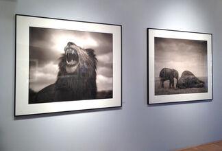 Nick Brandt: Across the Ravaged Land, installation view