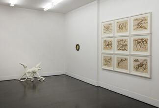 Museo di Storia Innaturale. Sala XVIII - Creature Meravigliose, installation view