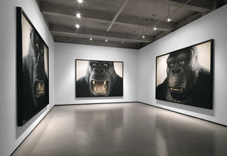 Walton Ford: I Don't Like To Look At Him, Jack. It Makes Me Think Of That Awful Day On the Island, installation view