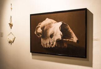 "Anna Cirillo - Momina Muhammad ""The Beauty of the Beast"", installation view"