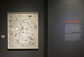Matthew Brandt: Sticky/Dusty/Wet, installation view