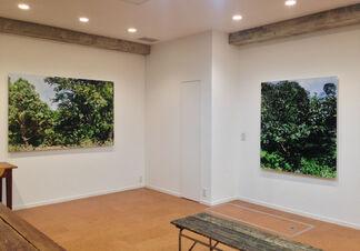 haptic green - Naruki Oshima, installation view