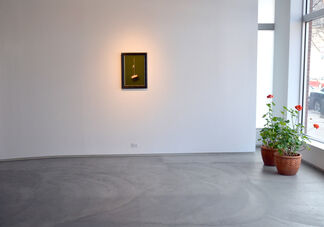 Kyle Surges High Definition, installation view