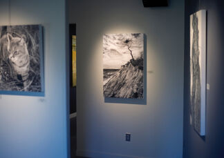 Gabriel Tempesta: Our World, Charcoals & Casein, installation view