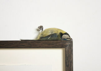 Polly Morgan - FOUNDATIONS AND REMAINS, installation view