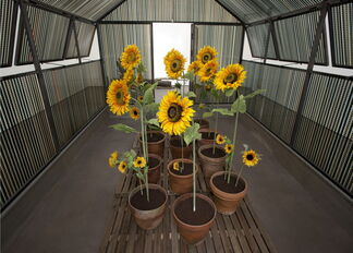 Agnès Varda - A CINEMA SHACK : The greenhouse of Happiness, installation view