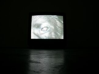 ARENA II, installation view