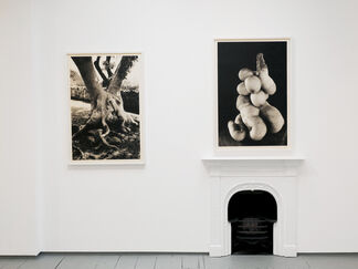 the HOOLIAN series, installation view
