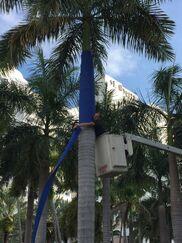 Blue Forest:  A Conceptual Project and Environmental Statement Featuring Sunbrella Fabric - Lucio Micheletti, installation view