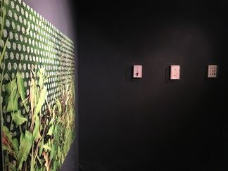 Close Encounters, installation view