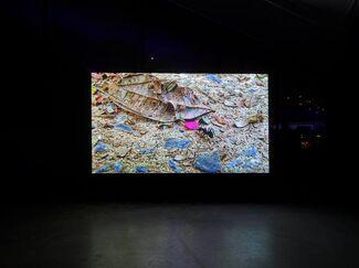 Locus: Apichatpong Weerasethakul - Cao Guimarães, installation view