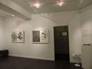 Barbara Edelstein: Leaf in the Air, installation view