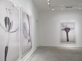 Linarejos Moreno: Art Forms in Mechanism, installation view