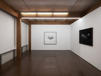 SF, installation view