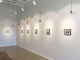 The Man Who Loved Flowers, installation view