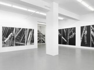Anna & Bernhard Blume - Im Wald, installation view
