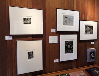 The Weston Legacy - The Nude, installation view