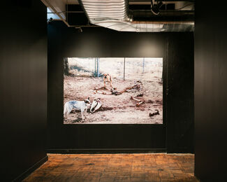 Postcommodity: Coyotaje, installation view