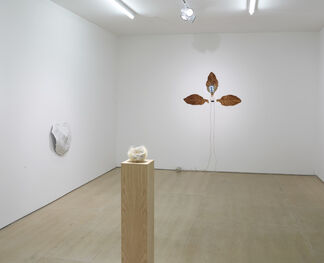 Ordering Nature, installation view