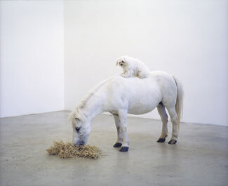 """Paola Pivi: """"No problem, have a nice day"""", installation view"""