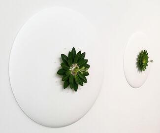 Botanical Studies, installation view