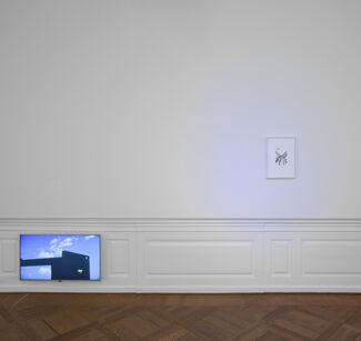 Endemisms, installation view