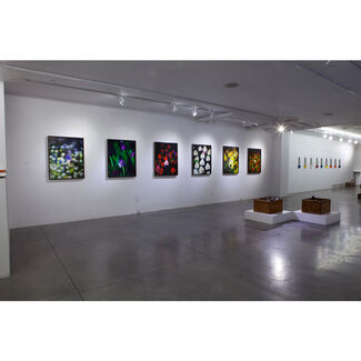 Sprouted, installation view