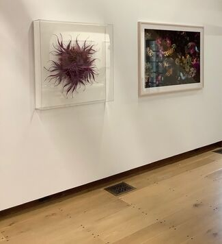 Bugs in the Barn, installation view