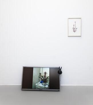 Wild Flowers (wildness is contextual!) – Volume II (grow flowers!), installation view