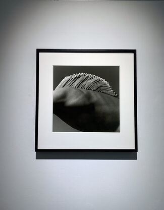 MMX Gallery  at Photo London 2021, installation view