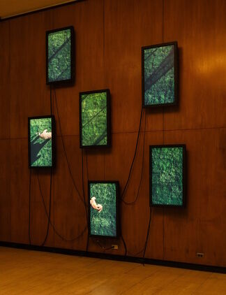 Diana Thater: The Sympathetic Imagination, installation view