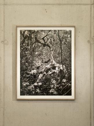 Mark Nettenbreijers - 'Rise & Fall', installation view