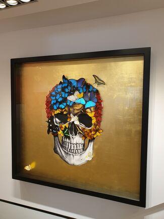 SN   Butterflies and Skulls, installation view
