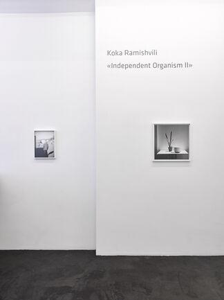 Koka Ramishvili »Independent Organism II«, installation view